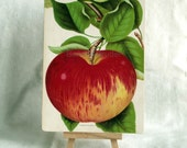 1890 Very Rare Antique Chromolithograph of an Apple on Panel. 1890 Print. Ready to Display