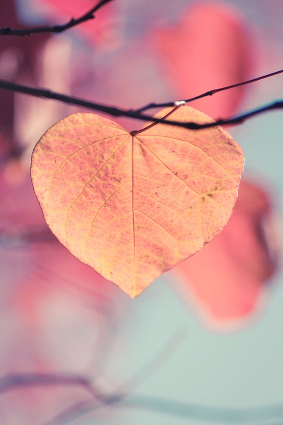 Autumn Love Iphone Wallpaper : Items similar to Autumn Photograph, Heart Shaped Leaf, Orange, Gold Leaves on Tree in Fall, Home ...