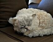 Custom Cat portrait. Memorial Needle felted cat. Real size