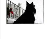 Scottie Dog Holiday Card - Scottish Terrier Christmas Card - Scotty Dog Greeting Card - Scottie Dog Photography