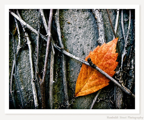 Caught - Autumn Leaf Photo - Minimalist Photograph - Nature Photography - Fall Leaves Art Print - Orange Grey Gray Black