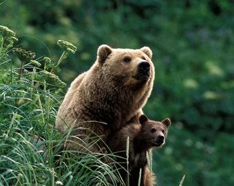 Baby Animal Photography, MOM and BABY BEAR Photo Print, Safari Baby Nursery, Wildlife Photography, Home Decor, Nursery Art, Grizzly Bear