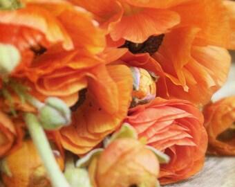Ombre Ranunculus - Photography Photograph - Burnt Orange Ranunculus Flower - Ombre - Still Life, Green, Fall, Autumn, Floral, Bloom, Blossom
