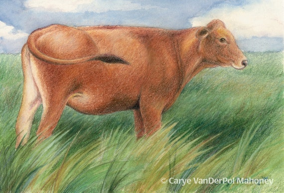 "Brown cow standing in a pasture of tall green grass pasture blowing in the wind, farm animal - Art Reproduction (Print) - ""Prairie"""