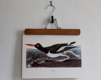 Vintage 1950s Audubon Birds of America Bookplate Print - Oystercatcher