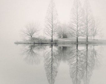 landscape photography, monochromatic, nature, fog, foggy, trees, winter, WINTER PARK