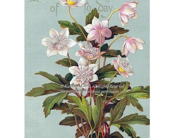 Floral Birthday Card Pink Wood Anemone Repro frm Vintage Image