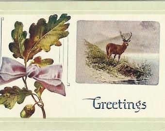 Buck Deer Hunters Treasure Vintage Postcard Autumn Greetings Vintage Ephemera Oak Leaves Acorn