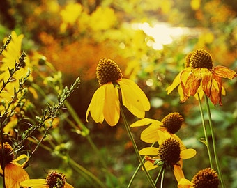 Sunset Wildflowers - Michigan Fine Art Photography - Kalamazoo Fine Art Photography