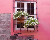 Bicycle Photograph, Pink Wall Art, Pink Photography, Lucca Photo, Pink Decor, Romantic Art, Italy Photograph, Window Box Photo, Flower Box