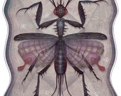 Entomology Tab. IV - A4 art print
