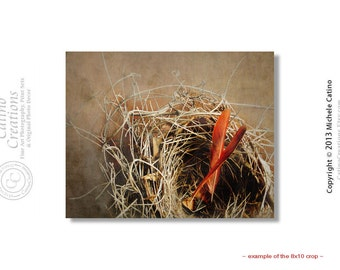 Empty Nest Sepia Tones with Red Cardinal Feathers in Empty Nest Fine Art Photography