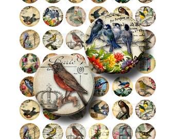 99 Cent Sale - Vintage Birds - Digital Collage Sheet  - 1 inch Round Circles - INSTANT DOWNLOAD
