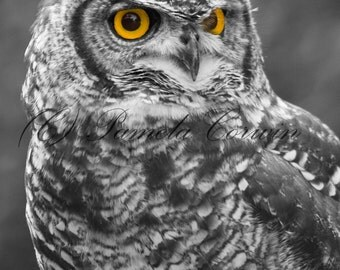 Owl Photo: Great Horned owl art black white and yellow photo Owl picture 8x10
