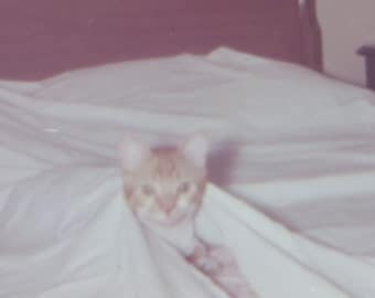 Peek A Boo - Silly 1960's Kitty Cat Hides Under The Covers Snapshot Photo - Free Shipping