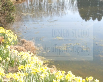 Tulips By The Lake, Rockville, Maryland, Brookside Gardens