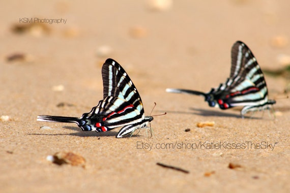"Butterfly Oasis Series #4 ""Beach Butterflies"" 8x12 PRINT (Watermark for display purposes ONLY) Beachy Nature Photography Love Beach Summer"
