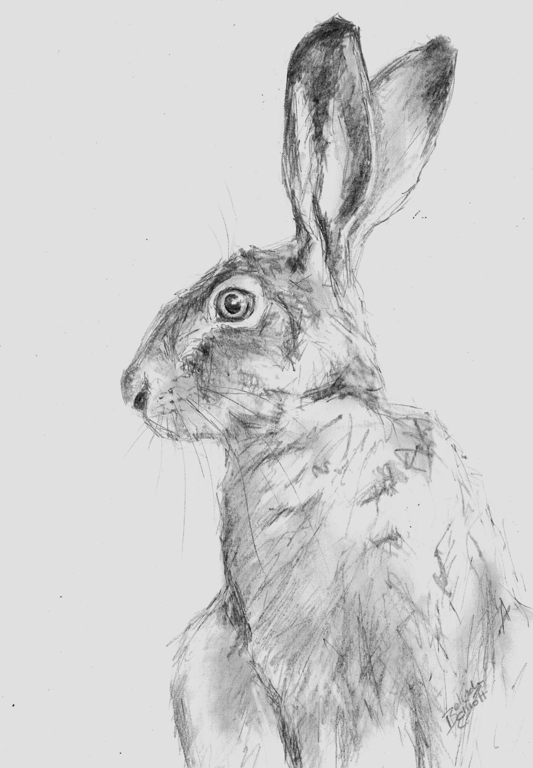 pencil animal drawing wildlife hare drawings a4 sketches animals artist elliott belinda bee etsy sketch draw sketching charcoal pastel study