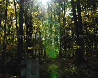 Relaxing art photography: sunlight through fall foliage, tall trees, yellow leaves, magical forest, mystical green sunbeams, zen art