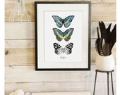 Lepidoptera - Butterfly Scientific Illustration. Beautifully textured cotton canvas art print. Order as an 8x10 11x14 or 16x20 size. Vol.2