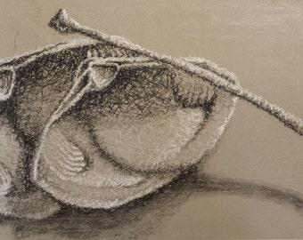 Clam Shells and Bird Bones I - Original Charcoal Drawing