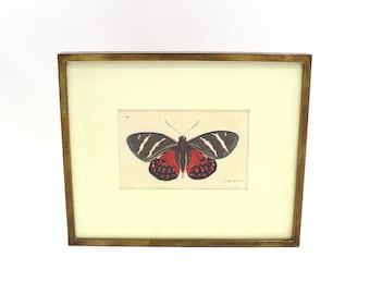 1815 Etching R.P. Nodder Butterfly Copper Plate Etching Framed Original