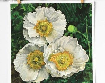 white poppies art print, poppy watercolor, flowers wall art, green and white botanical art prints