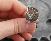 Steampunk Ammonite Fossil Adjustable Ring - The Fossilized Spiral of Time by COGnitive Creations