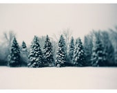 Woodland Art - Winter Photograph - Snow Photography - Winter and Woods - Pine Tree Art - Tree Print - Winter Print - Home Decor - Wall Art