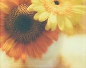Orange Sunflower Yellow Daisies 8x8 Photo Polaroid Fine  Art Photograph Textured Modern Wall Decor, Room Decor
