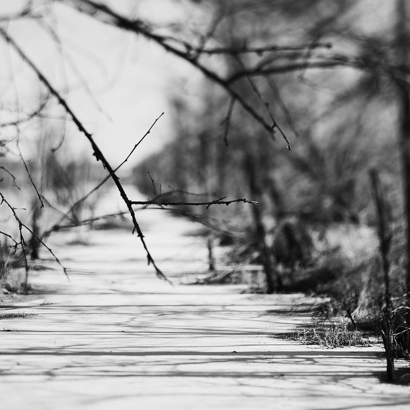 Wetlands Winter Stream gallery 32 etsy