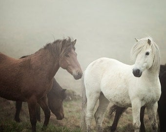"Horses in Fog, Nature Photography, Horse Art Prints, Fine Art Photography Print, Rustic Wall Art, Farm Decor 8x8 ""The Gathering Fog"""
