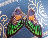 Emerald Birdwing, Monarch & Blue Layered Butterfly Wing Earrings