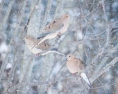 Winter Birds Print, Nursery Art, Woodland Animal Print, Nature Photography, Winter Decor, Wall Art, Mourning Doves in Snow No. 6