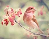 Bird Photography Print, Nature Photography, Woodland Animal Art Print, Bird Print, Forest Animal Wall Art Print, Purple Finch No. 1