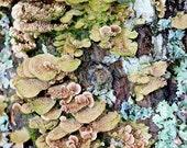 Nature Photo, Woodland Print, Nature Photography Print, Forest Art, Nature Wall Art, Earthy Art, Nature Photograph