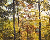 Ellijay Woods: fine art photograph print of woodland autumn trees and mountains (yellow, green, leaves, landscape, forest, fall)