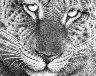 7x5 Giclee Print of a Leopard, Wildlife Art Gift, Animal Illustration, Picture, Wall Art Print