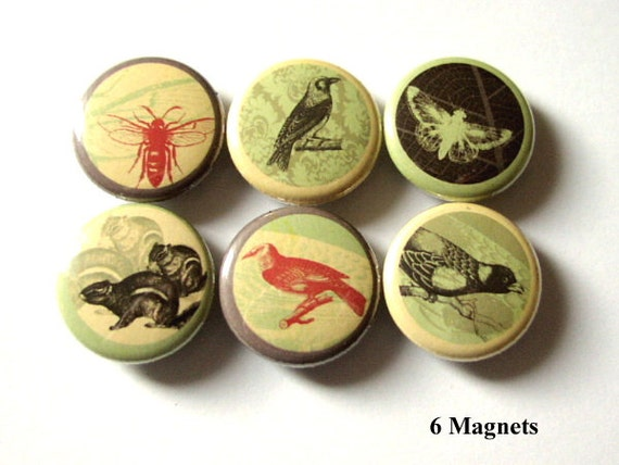 Fridge Magnets Woodland Creatures refrigerator retro bee squirrel birds crow stocking stuffers party favors shower gifts nature button pins