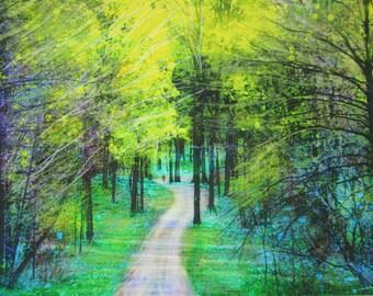 Spring rains, 16x20, Art, photography, nature, Michigan, roads less traveled, Michigan art, landscape, spring trees, green, art, green art