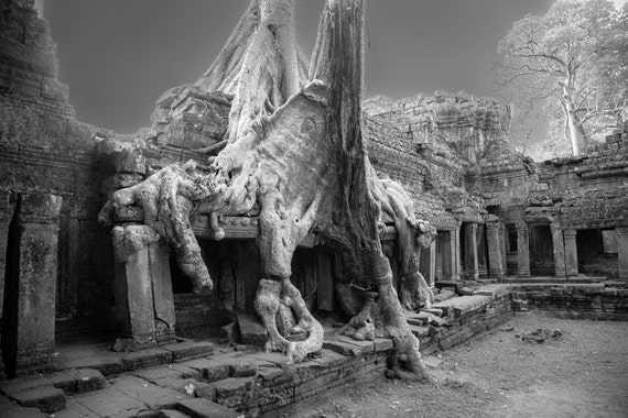 Black and white photo, Cambodia photograph, Preah Khan, infrared, Siem Reap, Angkor Wat, Tomb Raider, spooky, trees, Southeast Asia, travel