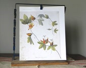 Vintage print of a flowering vine with yellow and green with aged edges book plate