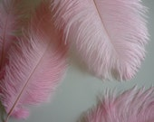 OSTRICH PLUMES , 1 piece, Baby Pink / 509