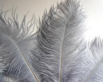 OSTRICH PLUMES , 1 piece, Platinum Grey /  546