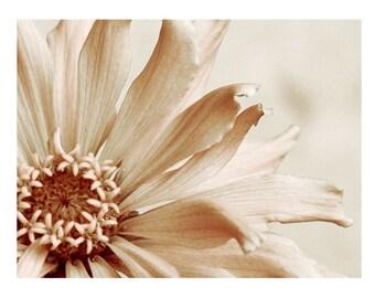 Macro Flower Photography Pale Pink Zinnia Dreamy Fine Art Floral Photograph