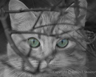 Butterboy - The Green-Eyed Tabby Kitty - 4x6 Fine Art Photograph