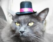 Cat or Dog Hat - Winter Glitz and Glam - Roaring 20s