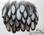 """Wing &/or Tail Feathers Black and White Feathers Real Bird Feather Natural Feather Silver Laced Hen 20 @ 4 - 4.5"""" / 1358 (Gallus domesticus)"""