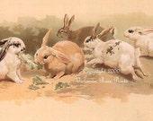 Victorian Rabbit, Art Print, Helena Maguire, Bunny, Half Yard Long, Shabby Chic Decor