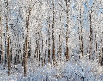 Winter Trees - Michigan Photography